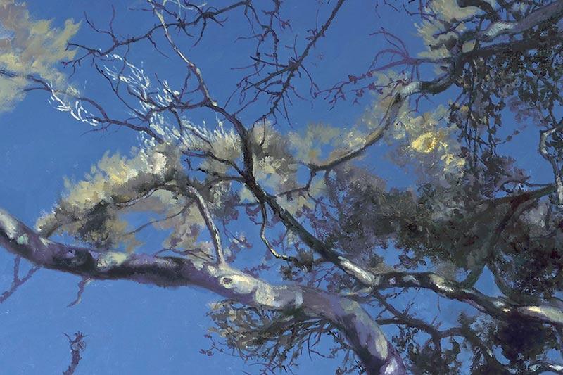 Detail of Coral Oak